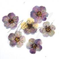 Dry Flower Single Purple
